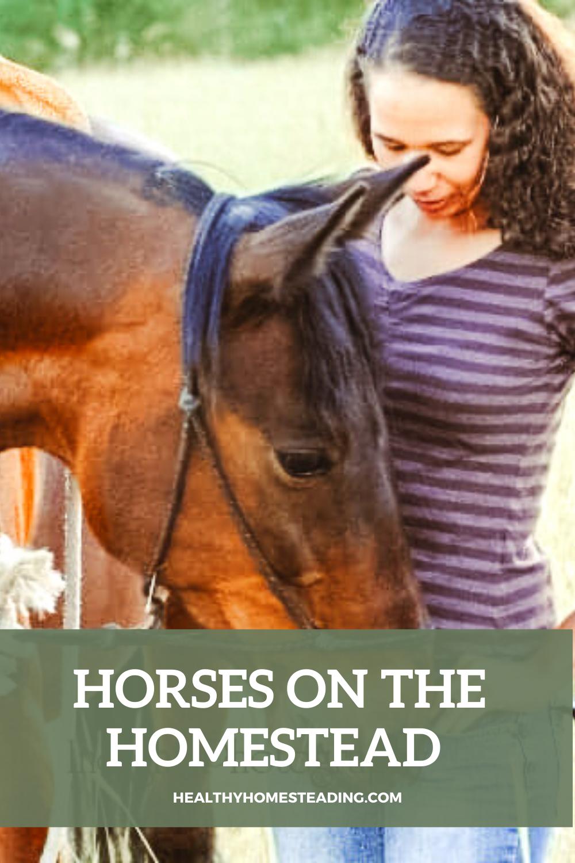 Horses on the Homestead